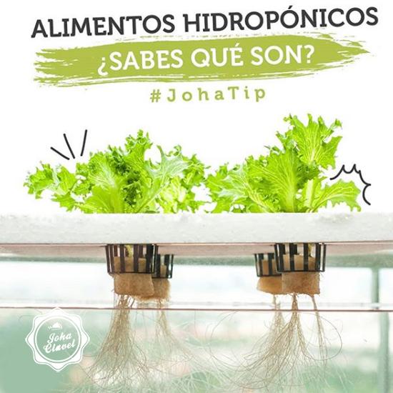 vegetales hidropónicos